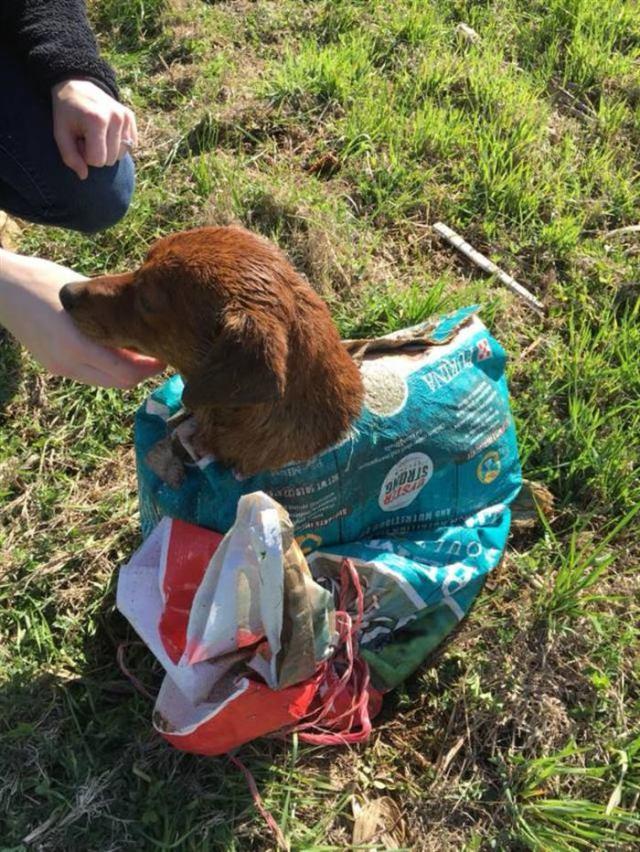 Пара нашла собаку, завязанную в мешок. Когда они открыли мешок, то обнаружили нечто ужасное
