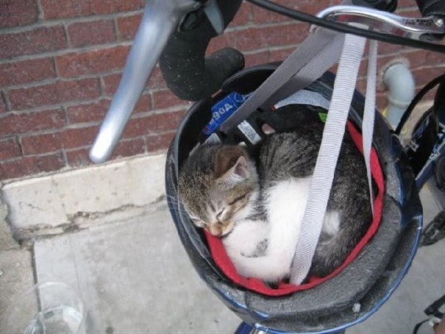 20 фото котов найденных в самых неожиданных местах.