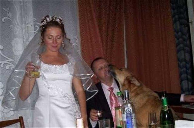 17 фотографий со свадеб. Смешные и неловкие моменты