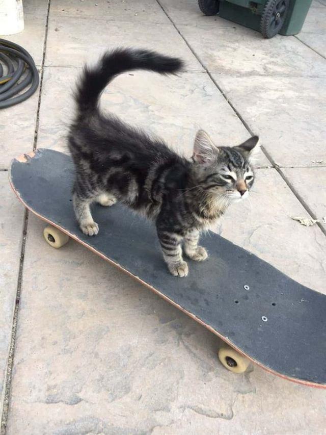 15 фото кошек, попавших в неопределенные ситуации, которые заставят вас смеяться