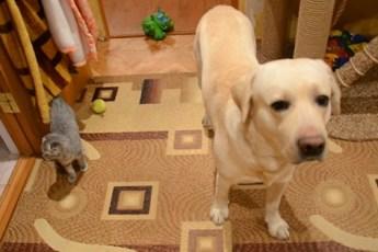 Хозяин ругает кота и пса за беспорядок в доме. Их реакция неподражаема!
