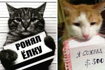 20 фото пристыженных котиков, которые совершили пакость