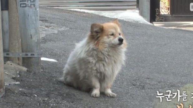 Преданная собака уже больше 3-х лет ждет свою хозяйку, которая уже не вернется