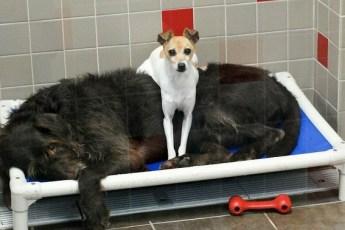 Две брошенные собаки не отходили друг от друга ни на шаг. Поэтому приюту пришлось пойти против правил