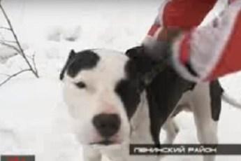 Пса оставили умирать в холодном лесу за царапины на паркете