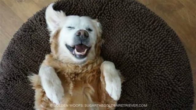 Домой к женщине приходи пес и просто спал. Но в один из дней к его ошейнику была прикреплена записка…