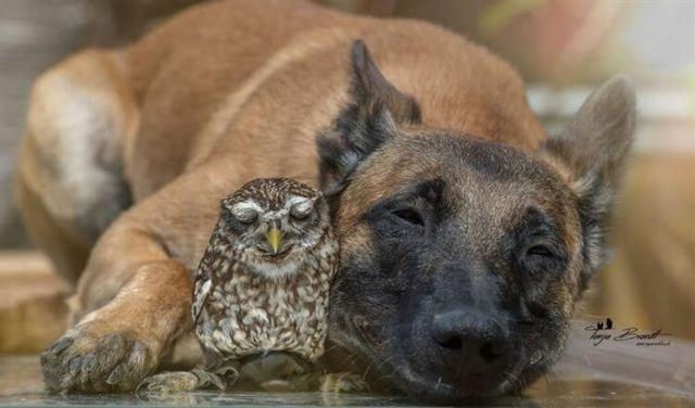 20 фотографий лучших друзей, собаки и совы. Самая теплая дружба!