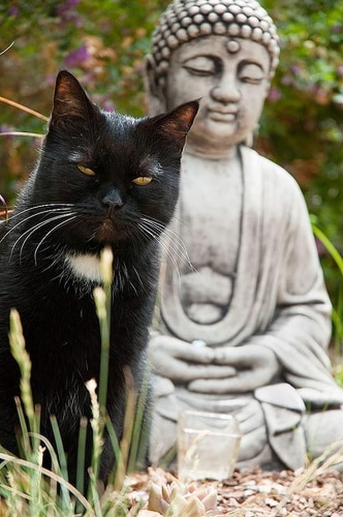 кот буддист картинки сглаз являются сильнейшим