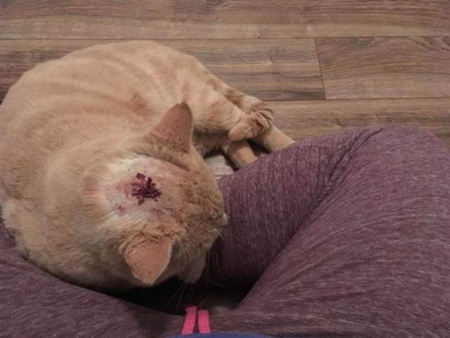 Желание жить было настолько сильным, что кот со стрелой в голове просил о помощи у чужих людей