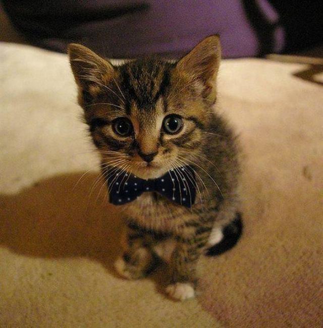Лучшее средство против депрессии. Милые котятки не дадут заскучать!