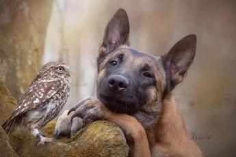 30 фотографий лучших друзей, собаки и совы. Самая теплая дружба!