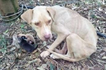 Из-за беременности, хозяева выбросили собаку на улицу. Но ее спасли волонтеры из местного приюта