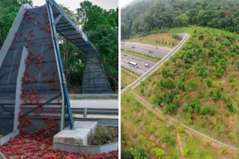 Эти мосты спасают миллионы жизней в год