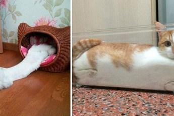19 котов, которые утверждают, что они жидкость!