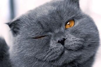 Бабуля принесла к ветеринарам кошку и пожаловалась, что она рожает каждый месяц