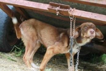 Хозяин привязал собаку на заднем дворе в надежде, что она погибнет от голода, а соседям сказал, что она бешеная и даже подходить к ней нельзя