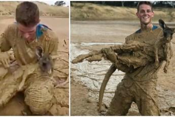 «На поверхности торчали только уши…» Подросток нырнул в болото, чтобы спасти кенгурёнка!