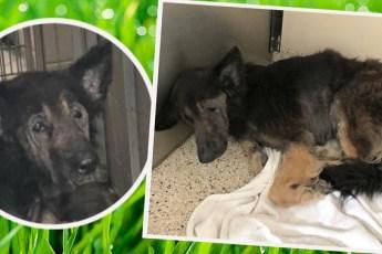 «Никто не любил его, никогда!..» Вместо усыпления самой стеснительной собаке подарили жизнь!
