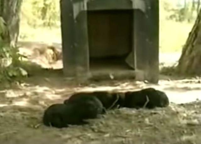 Кошка забрала у собаки только что родившихся щеночков. Узнав почему, вы будете тронуты до глубины души!