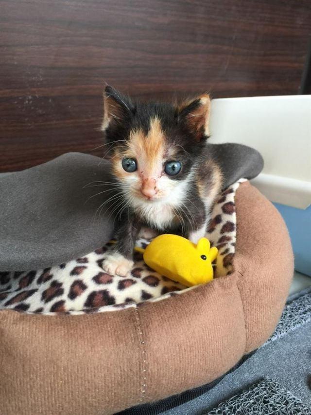 Кошка отказалась от котенка, потому что он был очень мал и слаб. Но судьба дала крохе второй шанс!