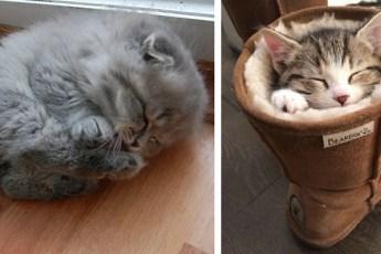20 пушистых спящих котяток. Ми-ми-мишность зашкаливает!