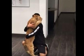 Невероятная встреча львенка со своим старым другом