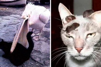 19 смешных котов, встретивших худший день в своей жизни