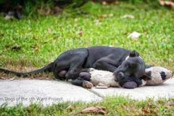 Люди обнаружили измождённую собаку на дороге – увидев, что она прижимала к себе, их сердца сжались от боли