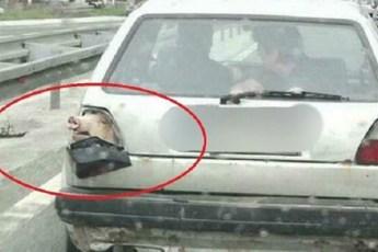 Забавные фото про животных и автомобили