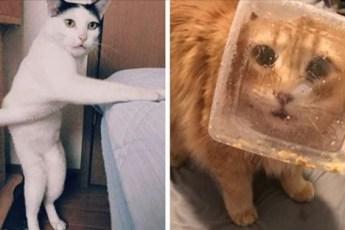 20 котиков, которые не блещут умом, зато заставляют посмеяться