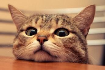 Видео о кошках, считающих себя какими-то другими животными