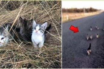 Котомафия существует! 10 бездомных котят преследуют девушку с собакой — и вот что те с ними делают…