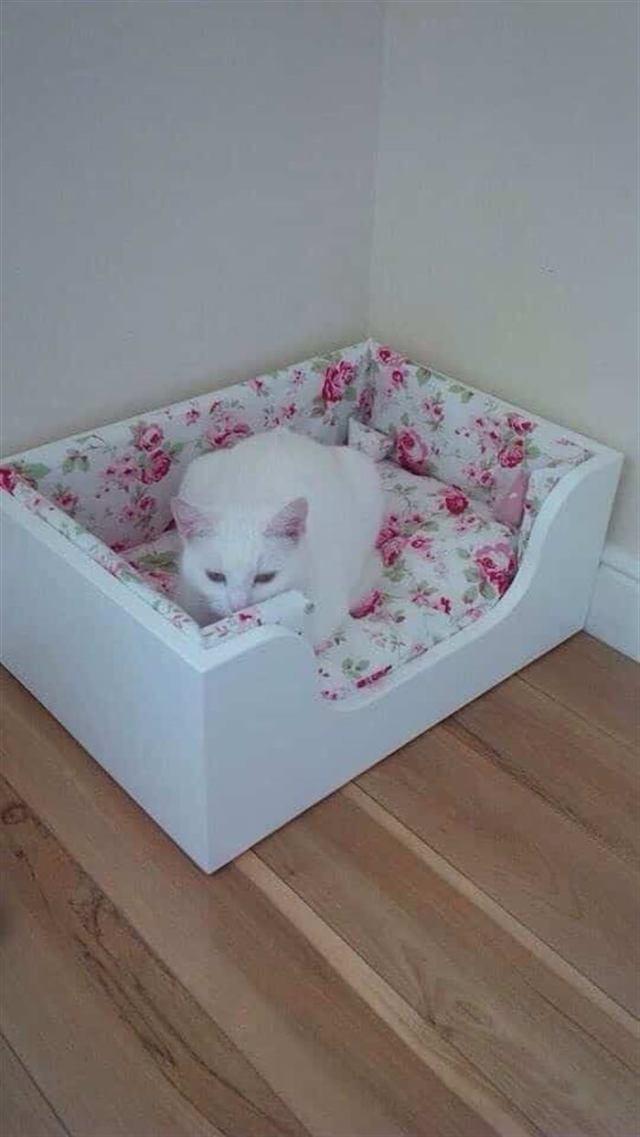 15 котов, которые сломали систему и таки спят в кроватках!