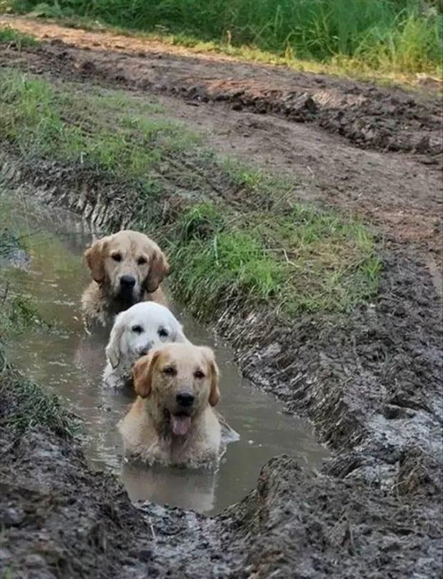 Эти собачки, довели хозяев, но рассмешили зрителей