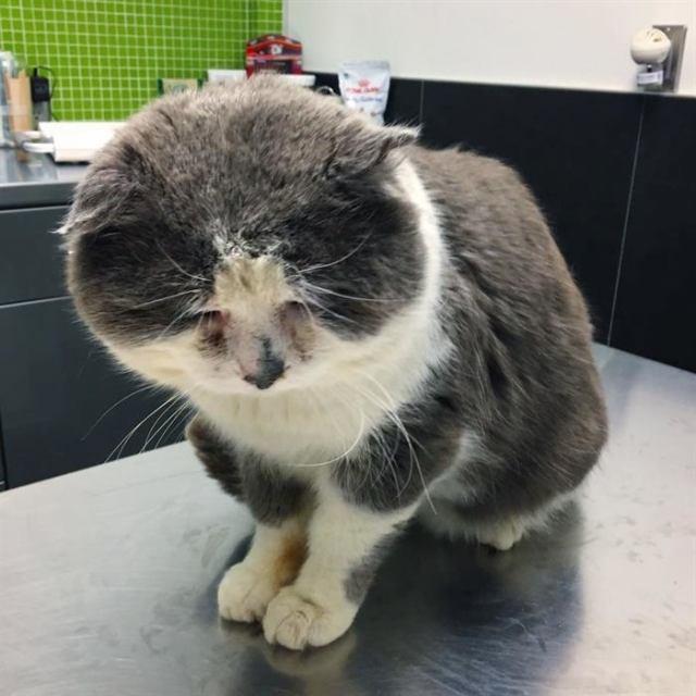 Кот бродяжничал несколько лет, но на седьмом году жизни его мечта о тёплом доме сбылась