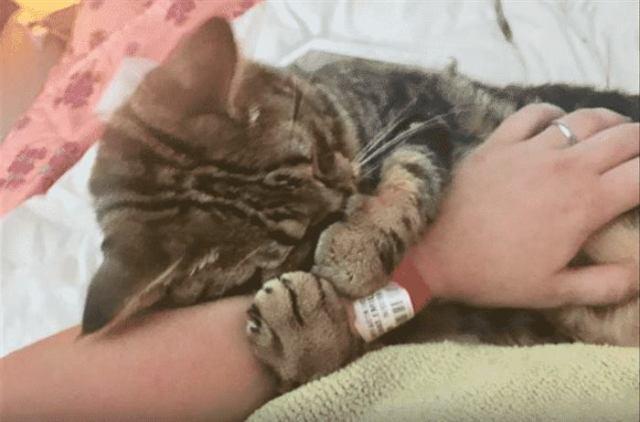 Она больше не будет одинока,, после того как вытащила котенка из лужи бензина