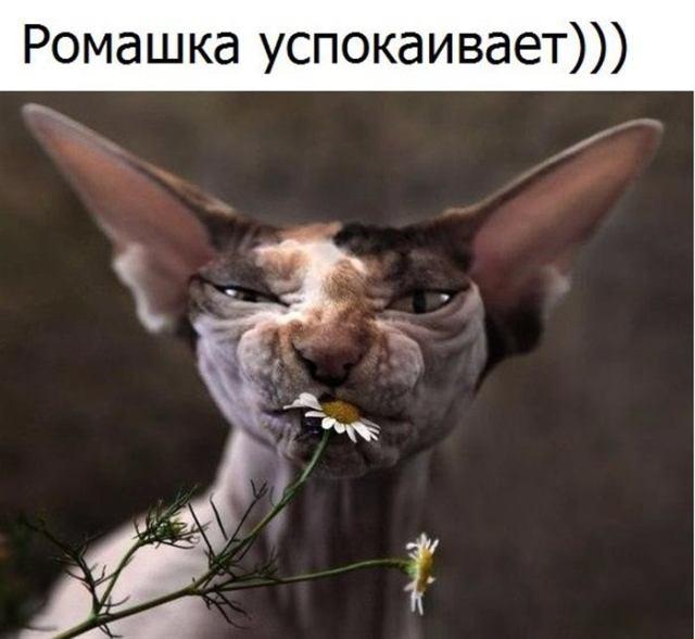 Фотографии забавных животных со смешными комментариями