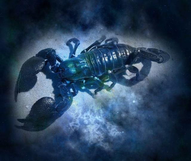 Я устала читать ″ванильные″ гороскопы — и нашла всю правду про все 12 знаков Зодиака!