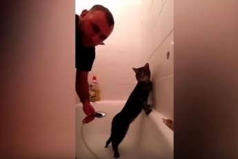 Неподражаемая реакция кота на попытку хозяина его искупать