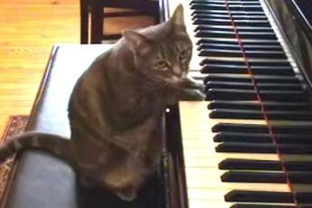 Это Нора, кошка, великолепно играющая на рояле!