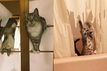 Кошки которые набедокурили, но им абсолютно не стыдно