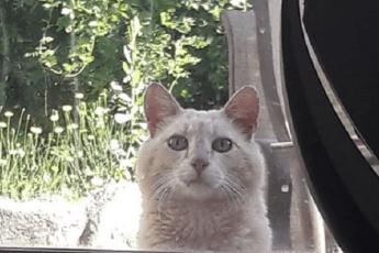 «Я — магнит для бездомных кошек!» Девушка на новоселье получила сюрприз от старых хозяев…