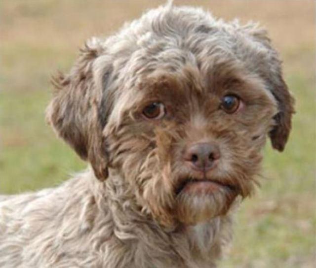 Собаки удивительно похожие на своих хозяев