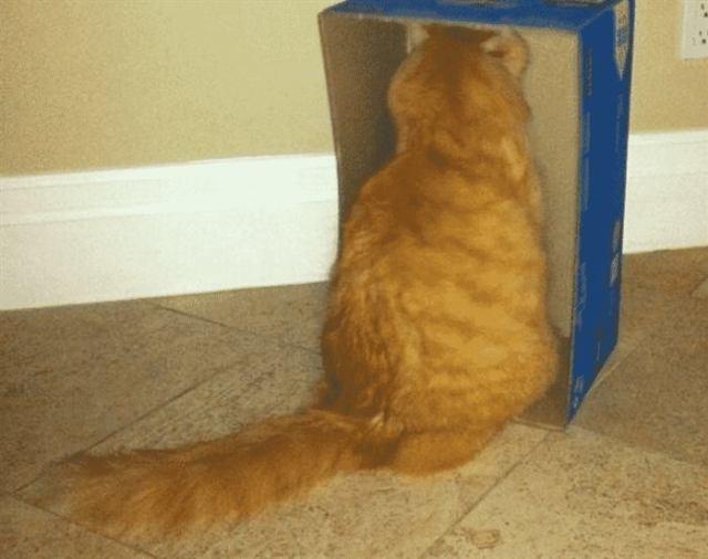Коты – обижульки. Они с вами больше не разговаривают