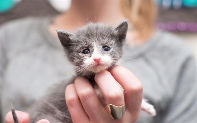 У этих красивейших кошек – одно сердце на двоих