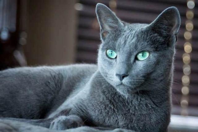 10 дорогих и редких кошек