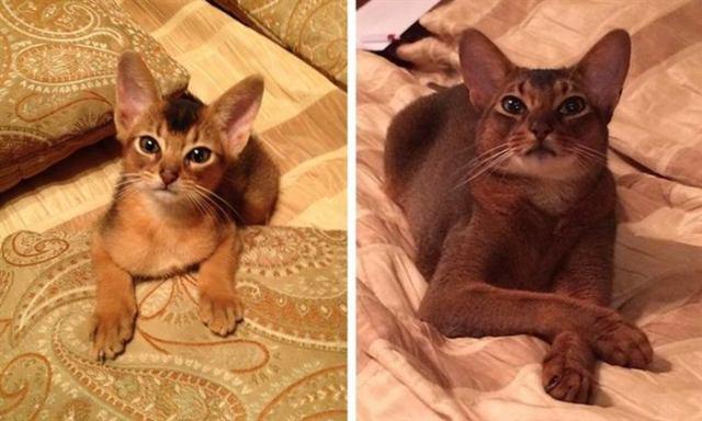 Фото котят, которые выросли в шикарных котов