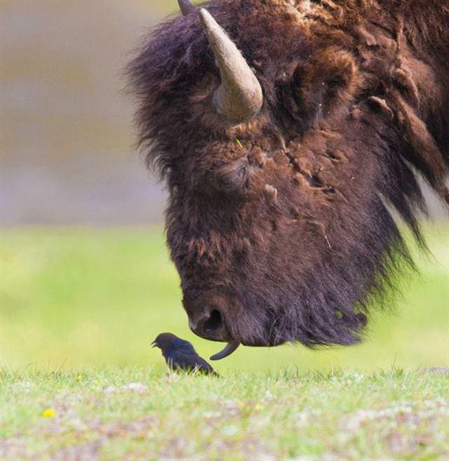 Животные, которые показывают вам язык. Это так мило!