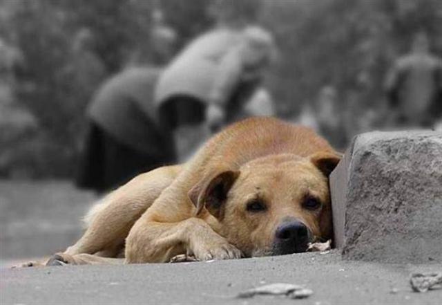В Итаотающим законам, количество бездомных животных в Италии уменьшается с каждым годом. Как хочется, что бы правительство Италии провело мастер-класс у нас в стране.