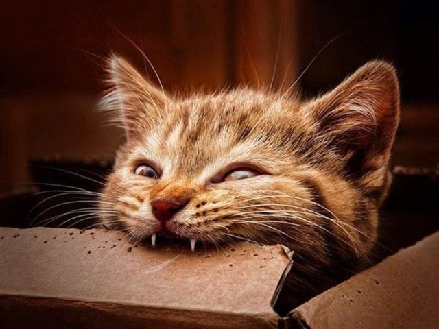 Самые кусачие, но все равно милые котики